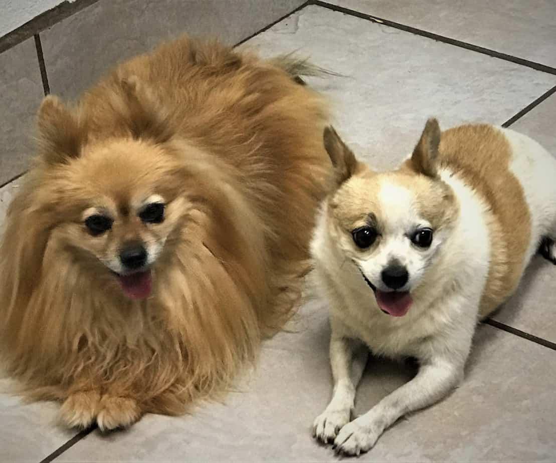 Juniper & Jenny - Argos, A Shelter Dog Rescue